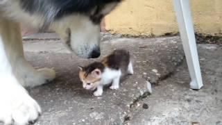 子猫強い!大きな犬もたじろぐ大物子猫