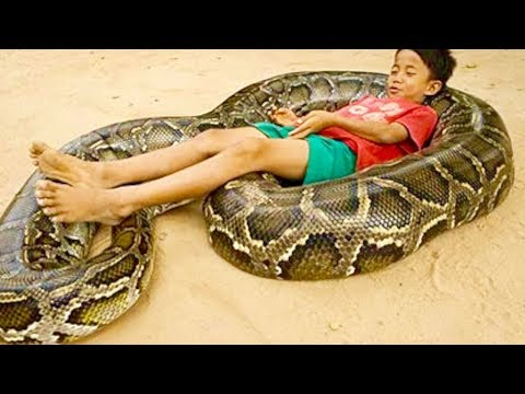 Strangest Animal People Relationships Ever