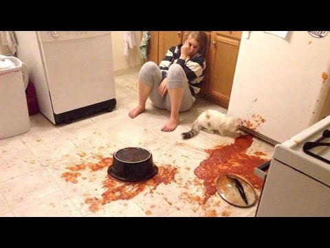 Owners are CRYING, you are LAUGHING! - Funny ANNOYING & TROUBLEMAKING ANIMALS
