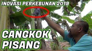 Video Pak Ndul - TEKNIK CANGKOK PISANG MP3, 3GP, MP4, WEBM, AVI, FLV Mei 2019