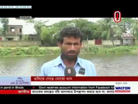 Boro cultivation affected in Sunamganj (30-04-2016)