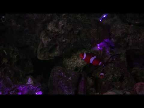 Submersible underwater colour changing waterproof LED Aquarium/Fish Tank Lighting/Lights/Lamp