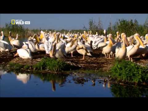 Dunaj evropská Amazonka E02