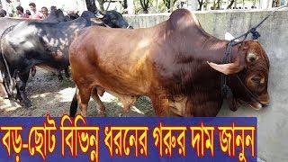 Video Desi Big big Cow for sale Eid - ul Azha 2018 show।অফুরন্ত বড় বড় গরুর মেলা দেখুন MP3, 3GP, MP4, WEBM, AVI, FLV Agustus 2018