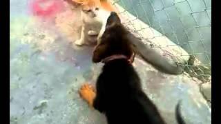 Chó hiếp dâm mèo