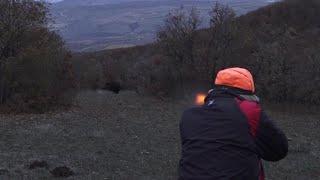 Video Harika bir  Domuz Avı Ekip İşi - ÇORUM / Perfect Action  wild boar hunting MP3, 3GP, MP4, WEBM, AVI, FLV Januari 2019
