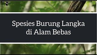 download lagu download musik download mp3 Spesies Burung Langka di Alam Bebas