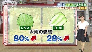 野菜が高騰!レタス、キュウリが8割増!?気になる価格、今いくら?(ニュース)