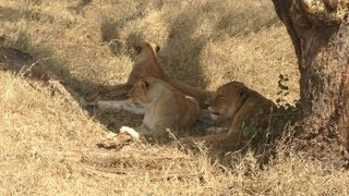 ♥African Safari Vlog-Day 5♥ Serengeti National Park Wild Animals, National Geographic