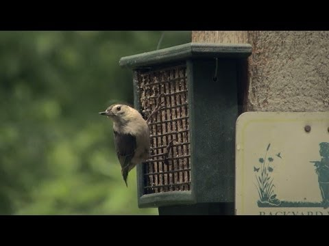 Back Yard Birding – how to attract birds to your home | Indiana DNR