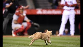Video MLB: Animal Interference MP3, 3GP, MP4, WEBM, AVI, FLV September 2018