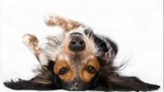 Video Bad Dog Song MP3, 3GP, MP4, WEBM, AVI, FLV Agustus 2018