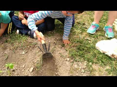 El desafío del cole San Pedro, de Baltanás
