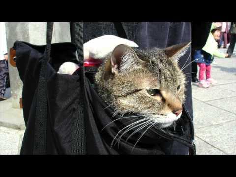 Life Coach – Street Cat