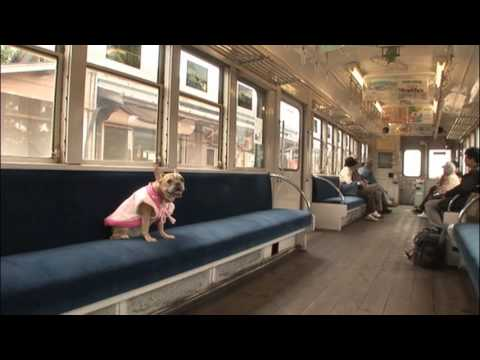 Funny French Bulldog Videos | Funny dogs video