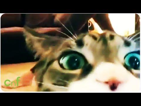 Cat Ruins Workout Video