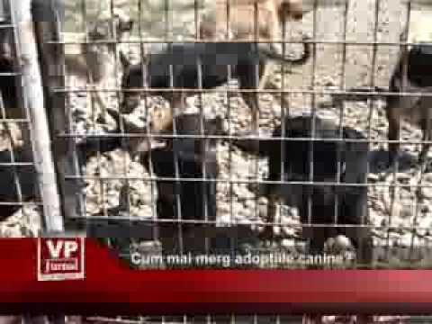 Cum mai merg adopțiile canine?