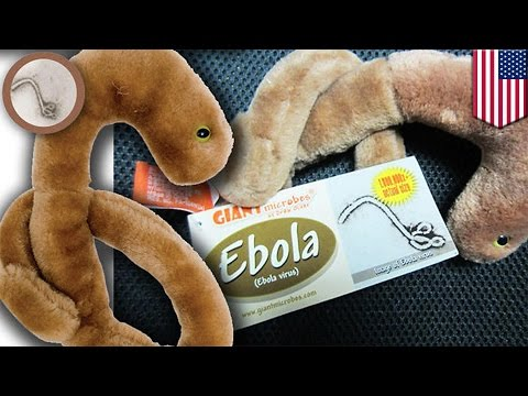 Company - Giantmicrobes Inc., an American toy company that specializes in stuffed models of microbes, is having trouble keeping up with the demands for their Ebola toy. The company has reportedly sold...