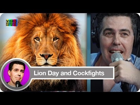 Lion Day and Cockfights | The Adam Carolla Show | Video Podcast Network