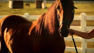Nonton A Horse Called Bear Movie Trailer June 2014 Film Subtitle Indonesia Streaming Movie Download