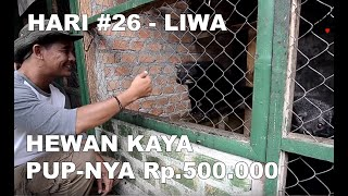 Video Eps.12 CATATAN  4 HARI DI LIWA. LAMPUNG BARAT. MP3, 3GP, MP4, WEBM, AVI, FLV Januari 2019