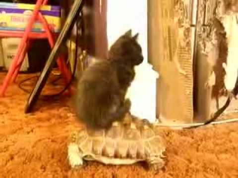 載貓咪的~烏龜巴士~