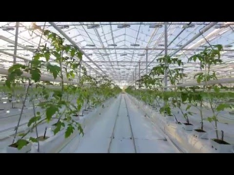 Introducing Proactive Professional Hydroponic Nutrients
