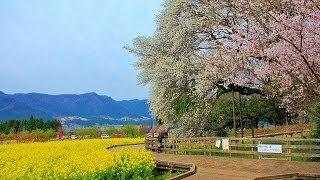 Minamiaso-mura Japan  city images : 桜の南阿蘇村から