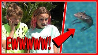 """We start trying to figure out what to do in our new backyard when we discover a dead rodent floating in the pool. Yuck! Later, Kayla and mom go furniture shopping for Kayla's new bedroom. See what furniture she finds! Subscribe https://www.youtube.com/c/wearethedavises?sub_confirmation=1Our mailing address:We Are The Davises28241 Crown Valley Pkwy, Ste F #613Laguna Niguel, CA 92677""""We Are The Davises"""" is an entertaining family vlog channel based in Florida. Our daily videos show our real life moments, challenges, funny skits, and traveling adventures. Shawn is an outstanding father and husband that enjoys coaching children in team sports like football and wrestling. Connie is very creative with our channel as she makes everything in our lives as fun and entertaining as possible while still molding our kids into the amazing people they are today. Kayla is currently 12 years old. Her passion is competitive cheer leading and loves all animals from fluffy puppies to the little frogs. Tyler is 11 years old and is obsessed with playing video games and team sports such as football. We are excited to share our fun filled journey!Check out our gaming channel We Are The Davises Gaming if you love gaming videos.https://www.youtube.com/channel/UCShsPtvK0WzxjljpN4rhVzgPlease be sure to check out all of our social media platforms that we have listed below for you.Twitter:  https://twitter.com/wearethedavisesFacebook:  https://www.facebook.com/wearethedavises/Instagram: https://www.instagram.com/wearethedavises/Google+: https://plus.google.com/u/0/+WeAreTheDavises2016/postsSnapchat:  https://www.snapchat.com/add/wearethedavisesMusical.ly:  wearethedavisesDo you like certain types of videos? Come and check out the playlists that we have setup to make it easier for you to watch what you like.Here is a playlist of all our daily videos. https://www.youtube.com/playlist?list=PL1SgveIsSpIqtjNq-QnGHSHxv410nkJfyThis playlist was put together specifically for all you Kayla fans.https://www"""