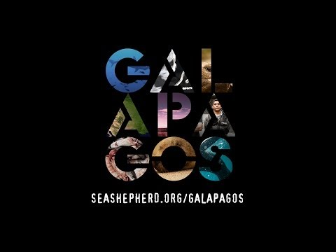 Sea Shepherd : Galapagos