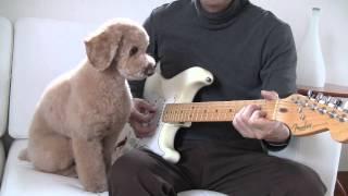 Dog Training EXTRA 3