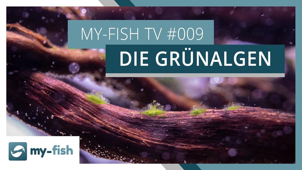 my-fish TV - Deine Nr. 1 Anlaufstelle für alle Themen rund um die Aquaristik 55