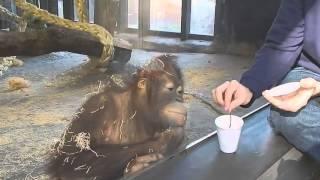 Chú khỉ Thông Minh Xem Ảo Thuật