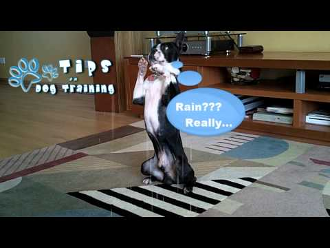 Dog Training Chicago Puppy Obedience Training