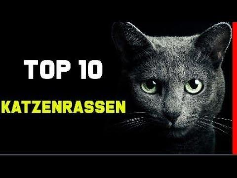 top 10 beliebtesten katzenrassen die sch nsten katzen hong delvalle. Black Bedroom Furniture Sets. Home Design Ideas