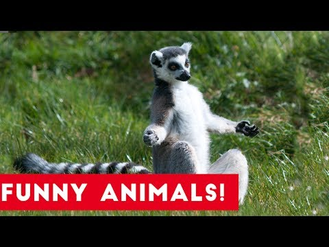Funniest Pets of the Week Compilation June 2017   Funny Pet Videos