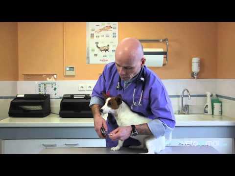 Pourquoi couper la queue d 39 un chien la r ponse est sur - Comment couper les griffes de son chien ...