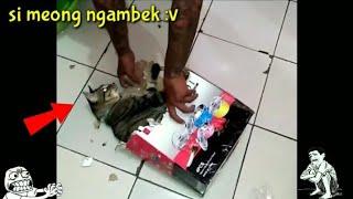 Akibat Gak di Izinin Main Keluar Rumah - Angry Cat 😾