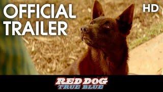 Nonton Red Dog  True Blue  2016  Teaser Trailer  Hd  Film Subtitle Indonesia Streaming Movie Download