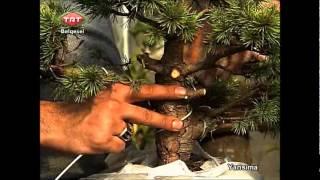 TRT Bonsai Belgeseli
