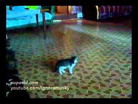 gatto entra in salotto ma... assurdo! guardate che succede!