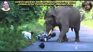 Video Wild Elephant Attack MP3, 3GP, MP4, WEBM, AVI, FLV Mei 2017