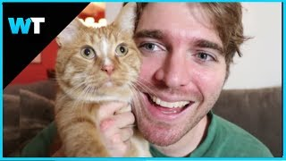Shane Dawson APOLOGIZES For CAT JOKE