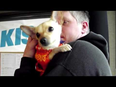 Adopt Pogo From the Animal Friends Humane Society