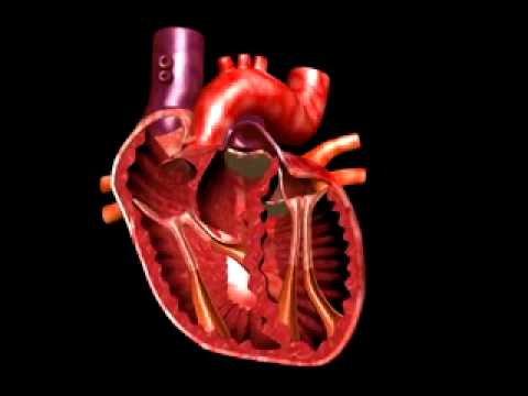 real human heart beating - photo #28