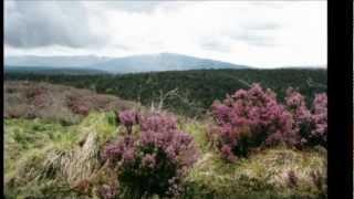 Jean Louis Murat- Au Mont Sans-Souci - YouTube