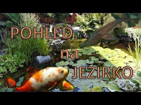 Pohled na jezírko / wiew of pond