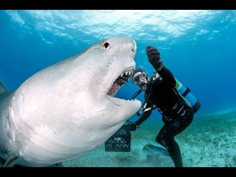 Craziest Shark Attacks Caught On Camera