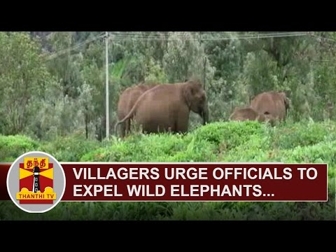 Villagers-urge-officials-to-expel-wild-elephants-near-Coonoor-Thanthi-TV