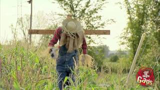 Scarecrow Shoots Crow